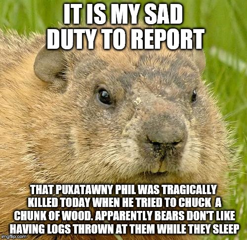 woodchuckpun | IT IS MY SAD DUTY TO REPORT THAT PUXATAWNY PHIL WAS TRAGICALLY KILLED TODAY WHEN HE TRIED TO CHUCK  A CHUNK OF WOOD. APPARENTLY BEARS DON'T  | image tagged in woodchuckpun | made w/ Imgflip meme maker