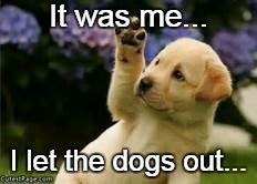 It was me... I let the dogs out... | image tagged in dogs,out,me | made w/ Imgflip meme maker