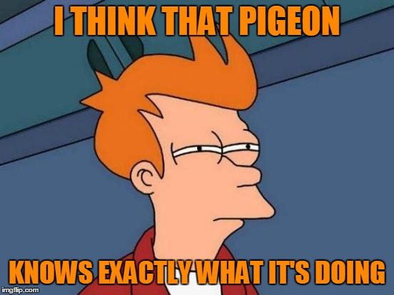 Futurama Fry Meme | I THINK THAT PIGEON KNOWS EXACTLY WHAT IT'S DOING | image tagged in memes,futurama fry | made w/ Imgflip meme maker