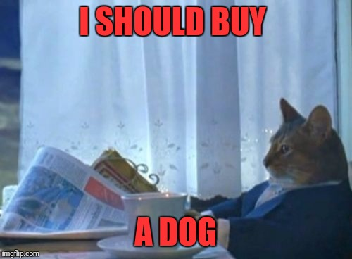 I Should Buy A Boat Cat Meme | I SHOULD BUY A DOG | image tagged in memes,i should buy a boat cat | made w/ Imgflip meme maker