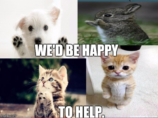 Cuteness Now Needed? I've jumped into the CNN meme war but figured I'd humbly offer this to anyone who might need it. :D | WE'D BE HAPPY TO HELP. | image tagged in memes,funny,cats,dogs,animals,politics | made w/ Imgflip meme maker