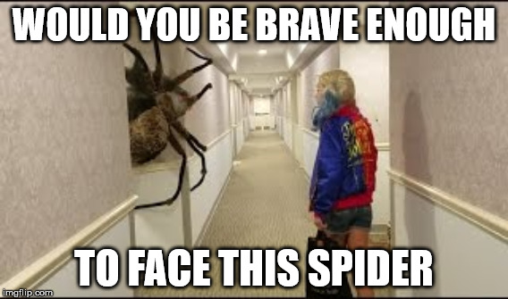 Worlds Largest Spider Meme | WOULD YOU BE BRAVE ENOUGH TO FACE THIS SPIDER | image tagged in spider | made w/ Imgflip meme maker