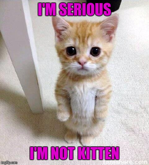 Meme by my 11 year old son |  I'M SERIOUS; I'M NOT KITTEN | image tagged in memes,cute cat | made w/ Imgflip meme maker