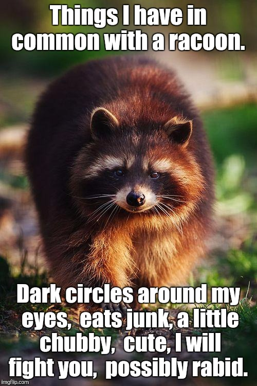 racoon walk | Things I have in common with a racoon. Dark circles around my eyes,  eats junk, a little chubby,  cute, I will fight you,  possibly rabid. | image tagged in racoon walk | made w/ Imgflip meme maker
