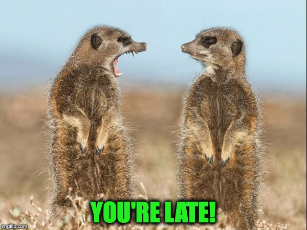 Late For Work | YOU'RE LATE! | image tagged in meerkats | made w/ Imgflip meme maker