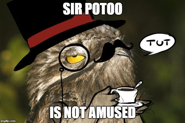 SIR POTOO IS NOT AMUSED | image tagged in sir potoo is not amused | made w/ Imgflip meme maker