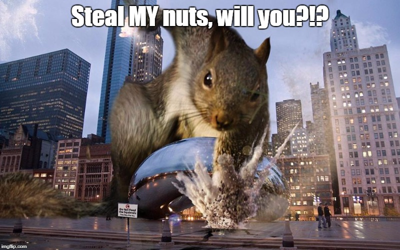 Steal MY nuts, will you?!? | image tagged in angry squirrel | made w/ Imgflip meme maker