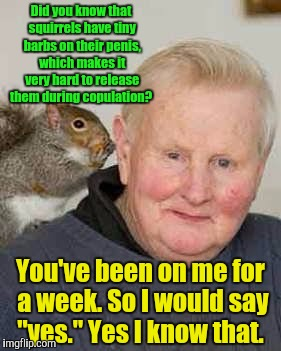 Please release me.  | Did you know that squirrels have tiny barbs on their p**is, which makes it very hard to release them during copulation? You've been on me fo | image tagged in funny meme,squirrel,penis | made w/ Imgflip meme maker