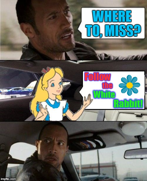 Curiouser and curiouser | WHERE TO, MISS? Rabbit! Follow the White | image tagged in the rock driving alice in wonderland,memes,the rock driving,socrates meme,alice in wonderland,white rabbit | made w/ Imgflip meme maker