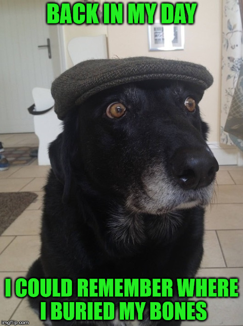 Back In My Day Dog | BACK IN MY DAY I COULD REMEMBER WHERE I BURIED MY BONES | image tagged in back in my day dog | made w/ Imgflip meme maker