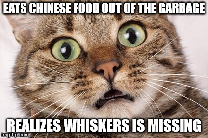 EATS CHINESE FOOD OUT OF THE GARBAGE REALIZES WHISKERS IS MISSING | image tagged in scared cat | made w/ Imgflip meme maker