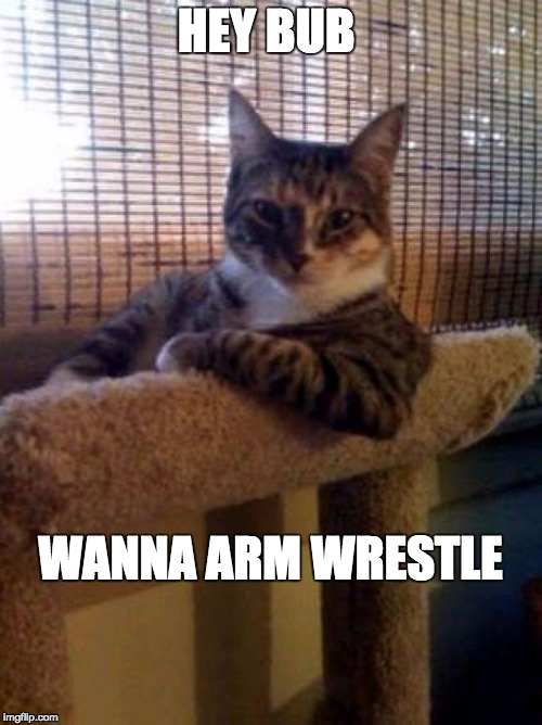 Muscle Cat |  HEY BUB; WANNA ARM WRESTLE | image tagged in cats,muscle,cat,armwrestle,crazy,funny memes | made w/ Imgflip meme maker