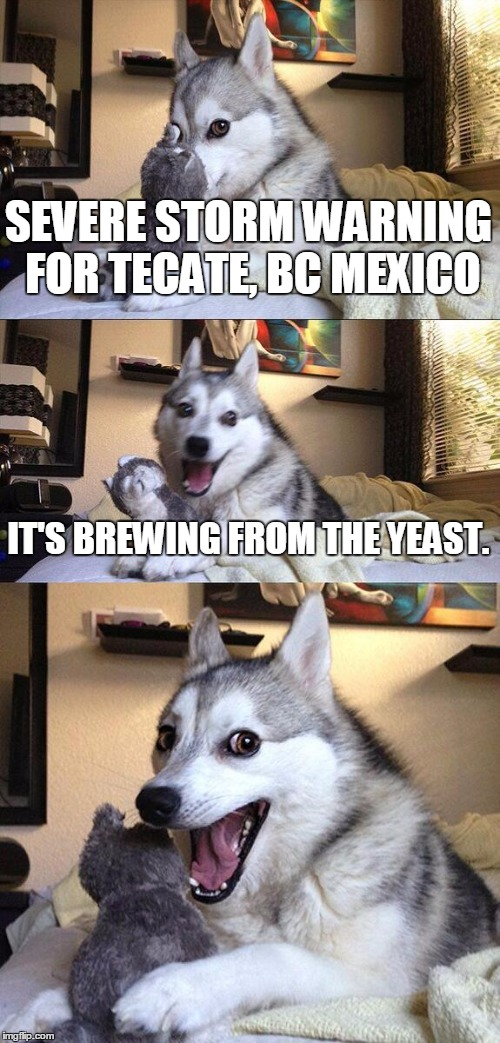 Bad Pun Dog Meme | SEVERE STORM WARNING FOR TECATE, BC MEXICO IT'S BREWING FROM THE YEAST. | image tagged in memes,bad pun dog | made w/ Imgflip meme maker