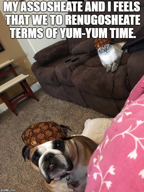 MY ASSOSHEATE AND I FEELS THAT WE TO RENUGOSHEATE TERMS OF YUM-YUM TIME. | image tagged in dogs,cats,pets | made w/ Imgflip meme maker