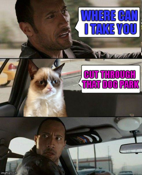 Grumpy's final destination... | WHERE CAN I TAKE YOU CUT THROUGH THAT DOG PARK | image tagged in the rock driving,grumpy cat,the rock driving grumpy cat | made w/ Imgflip meme maker
