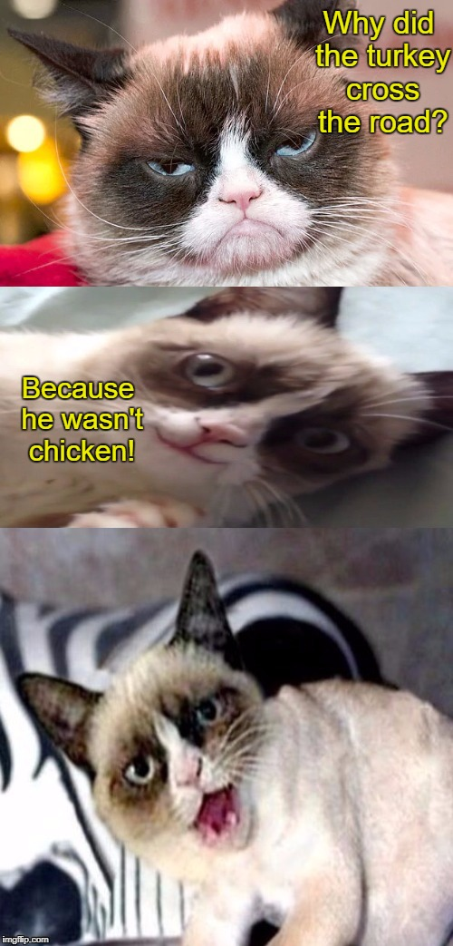 Bad Pun Grumpy Cat | Why did the turkey cross the road? Because he wasn't chicken! | image tagged in bad pun grumpy cat | made w/ Imgflip meme maker