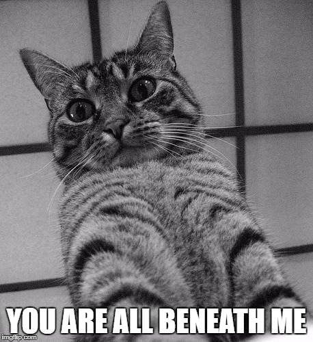 Top Cat | YOU ARE ALL BENEATH ME | image tagged in cat,cattitude,puns,literal meme,top cat | made w/ Imgflip meme maker