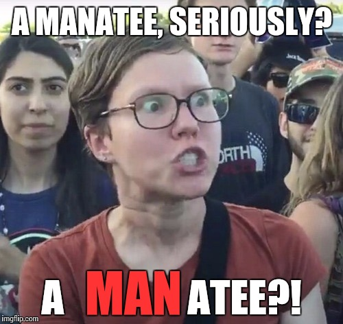 A MANATEE, SERIOUSLY? A                ATEE?! MAN | made w/ Imgflip meme maker