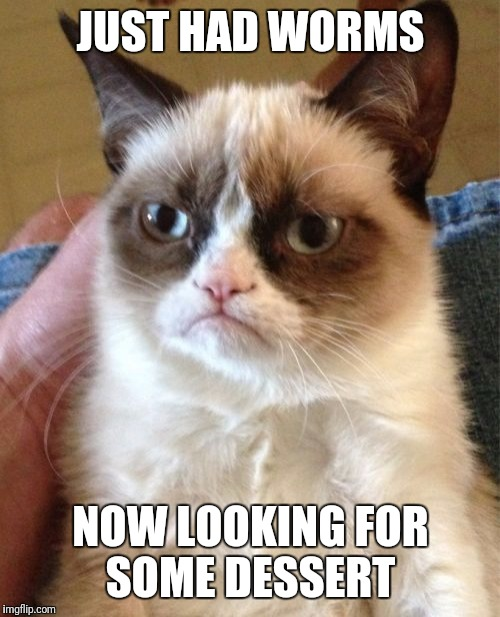 Grumpy Cat Meme | JUST HAD WORMS NOW LOOKING FOR SOME DESSERT | image tagged in memes,grumpy cat | made w/ Imgflip meme maker