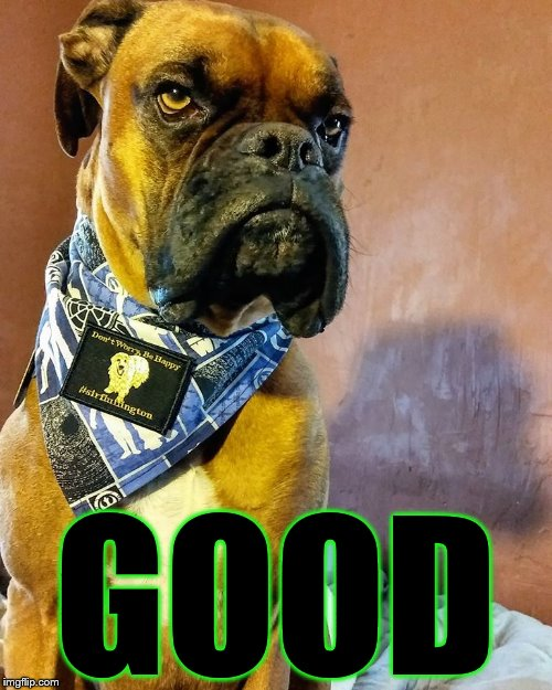 Grumpy Dog | GOOD | image tagged in grumpy dog | made w/ Imgflip meme maker