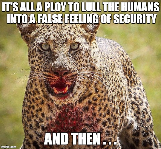 IT'S ALL A PLOY TO LULL THE HUMANS INTO A FALSE FEELING OF SECURITY AND THEN . . . | made w/ Imgflip meme maker