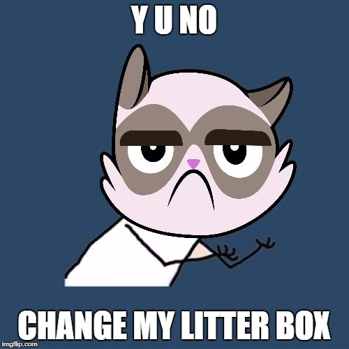 Y U NO CHANGE MY LITTER BOX | made w/ Imgflip meme maker
