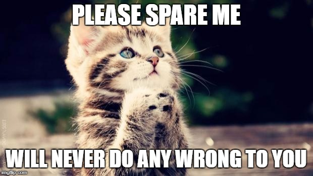 Praying cat | PLEASE SPARE ME WILL NEVER DO ANY WRONG TO YOU | image tagged in praying cat | made w/ Imgflip meme maker