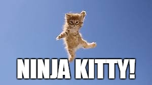 NINJA KITTY! | made w/ Imgflip meme maker