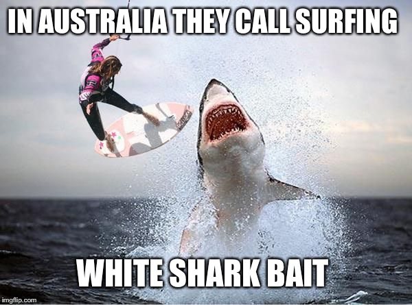IN AUSTRALIA THEY CALL SURFING WHITE SHARK BAIT | made w/ Imgflip meme maker