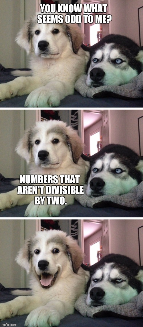 Bad pun dogs | YOU KNOW WHAT SEEMS ODD TO ME? NUMBERS THAT AREN'T DIVISIBLE BY TWO. | image tagged in bad pun dogs | made w/ Imgflip meme maker