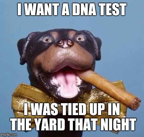 I WANT A DNA TEST I WAS TIED UP IN THE YARD THAT NIGHT | made w/ Imgflip meme maker