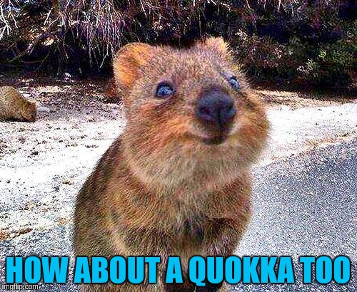 HOW ABOUT A QUOKKA TOO | made w/ Imgflip meme maker