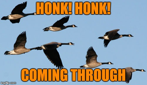 HONK! HONK! COMING THROUGH | made w/ Imgflip meme maker