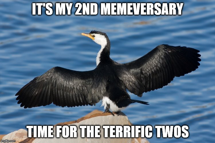 Duckguin | IT'S MY 2ND MEMEVERSARY TIME FOR THE TERRIFIC TWOS | image tagged in duckguin | made w/ Imgflip meme maker