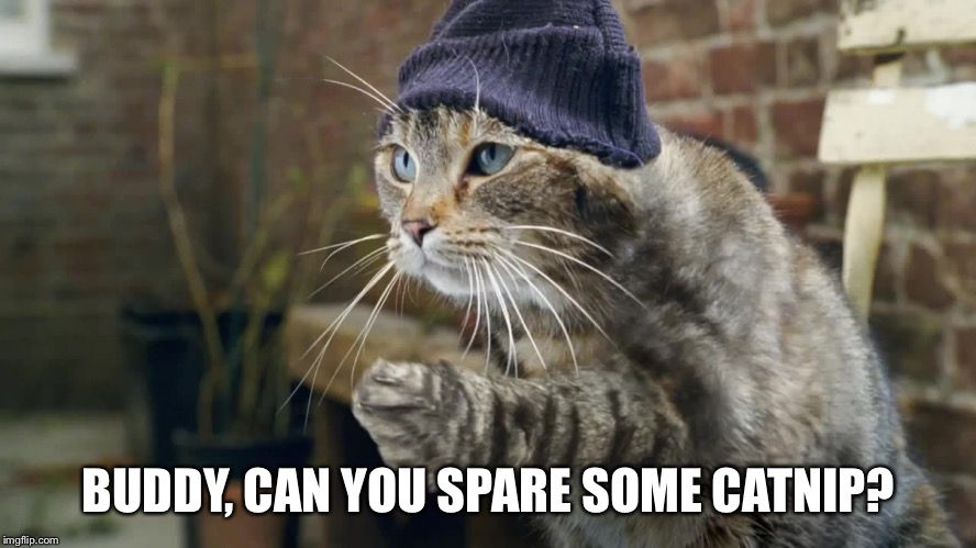 BUDDY, CAN YOU SPARE SOME CATNIP? | made w/ Imgflip meme maker