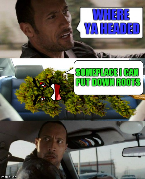 You can't plant a tree in Rocks... | WHERE YA HEADED SOMEPLACE I CAN PUT DOWN ROOTS | image tagged in the rock driving,trees | made w/ Imgflip meme maker