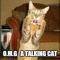 O.M.G   A TALKING CAT | made w/ Imgflip meme maker