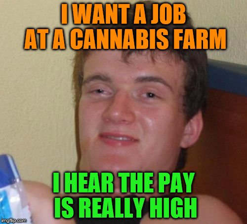 10 Guy Meme | I WANT A JOB AT A CANNABIS FARM I HEAR THE PAY IS REALLY HIGH | image tagged in memes,10 guy | made w/ Imgflip meme maker