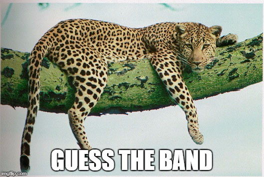 Winner Gets All Memes In The Past Month Upvoted | GUESS THE BAND | image tagged in leopard,guess the band | made w/ Imgflip meme maker