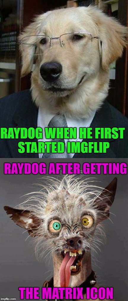 Sometimes I envy those users that are able to just quit and delete their accounts...I couldn't even if I wanted to. | RAYDOG WHEN HE FIRST STARTED IMGFLIP RAYDOG AFTER GETTING THE MATRIX ICON | image tagged in imgflip addiction,memes,raydog,funny,imgflip,dogs | made w/ Imgflip meme maker