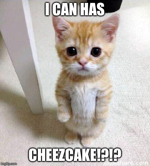 Cute Cat Meme | I CAN HAS CHEEZCAKE!?!? | image tagged in memes,cute cat | made w/ Imgflip meme maker