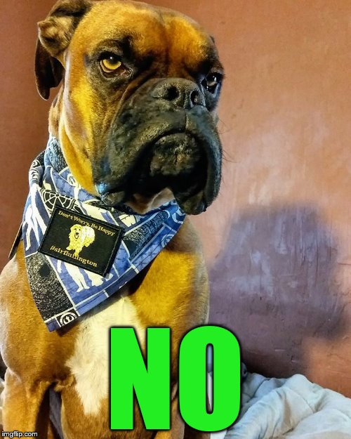 Grumpy Dog | NO | image tagged in grumpy dog | made w/ Imgflip meme maker