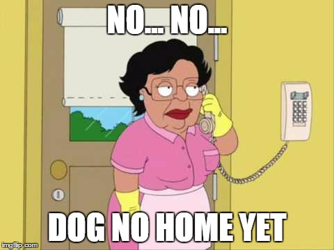 NO... NO... DOG NO HOME YET | made w/ Imgflip meme maker