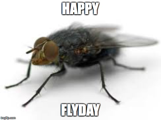 HAPPY FLYDAY | made w/ Imgflip meme maker