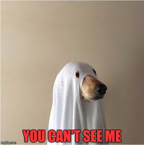 Ghost Doge | YOU CAN'T SEE ME | image tagged in ghost doge | made w/ Imgflip meme maker