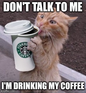 Image result for cat drinking meme