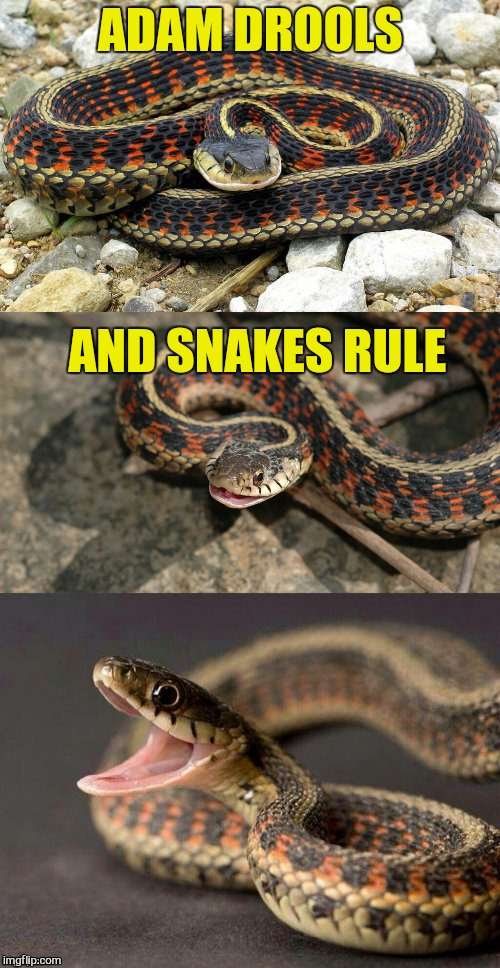 Snake Puns | ADAM DROOLS AND SNAKES RULE | image tagged in snake puns | made w/ Imgflip meme maker