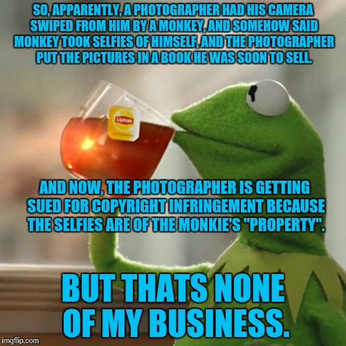 Its amazing how people are idiots, nowadays. | SO, APPARENTLY, A PHOTOGRAPHER HAD HIS CAMERA SWIPED FROM HIM BY A MONKEY, AND SOMEHOW SAID MONKEY TOOK SELFIES OF HIMSELF, AND THE PHOTOGRA | image tagged in memes,but thats none of my business,kermit the frog,funny | made w/ Imgflip meme maker