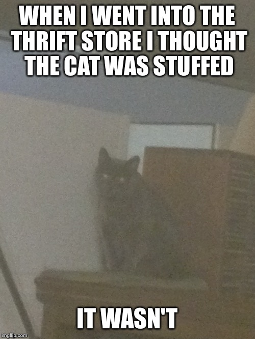 This scared the Hell outta me when I touched it | WHEN I WENT INTO THE THRIFT STORE I THOUGHT THE CAT WAS STUFFED IT WASN'T | image tagged in demonic,cats,memes | made w/ Imgflip meme maker