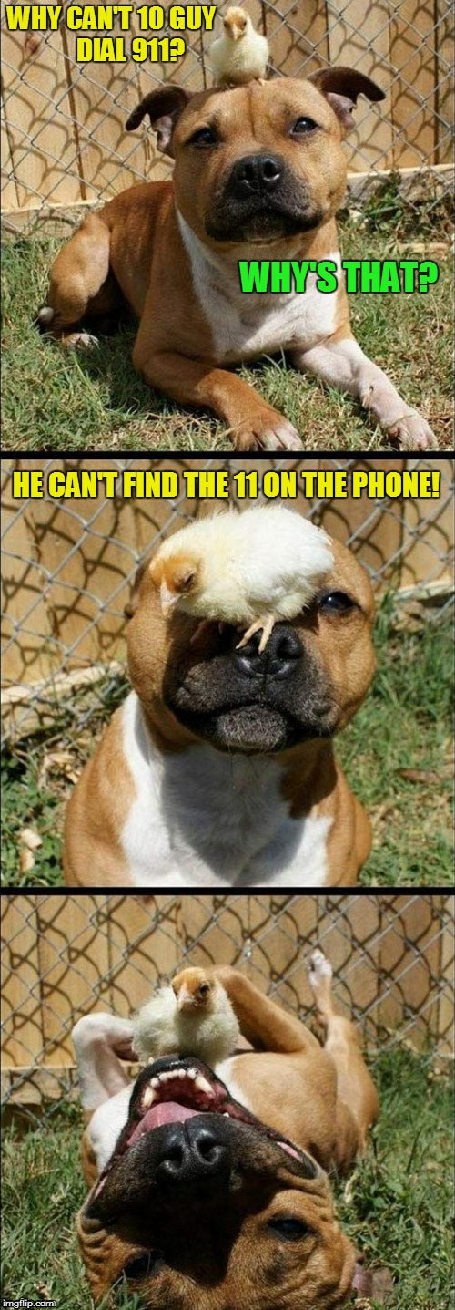 Serious chick puns |  WHY CAN'T 10 GUY       DIAL 911? WHY'S THAT? HE CAN'T FIND THE 11 ON THE PHONE! | image tagged in serious chick puns,memes,jokes,10 guy,911,laughing dog | made w/ Imgflip meme maker